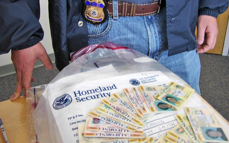 An ICE special agent displays counterfeit California driver's licenses.