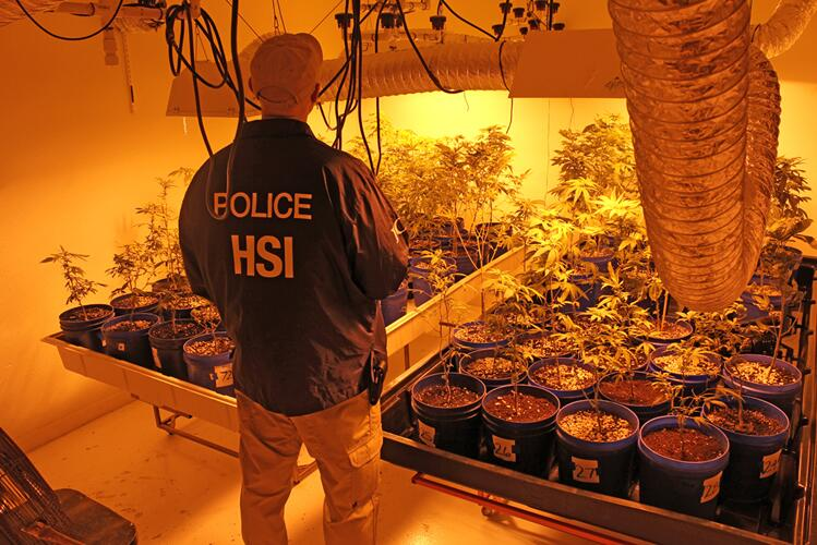 An HSI special agent inspects seized drug property.