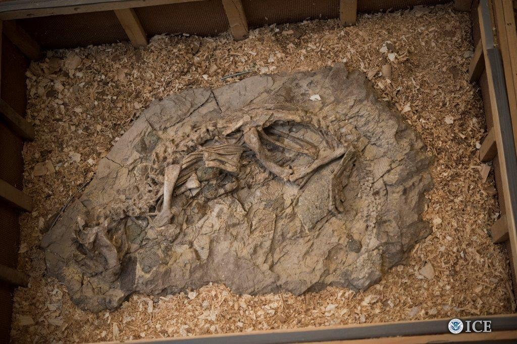 ICE returns dinosaur skeletons, eggs to Mongolia