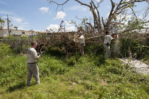 Tree Cutting in Casa de Todos