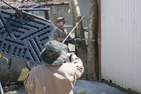 Tree Cutting in Casa de Todos