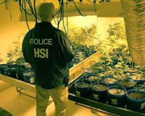 Agents uncover hydroponic marijuana grow and weapons at National City warehouse