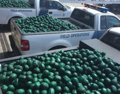Approximately 11,000lbs of marijuana concealed within fake fruit