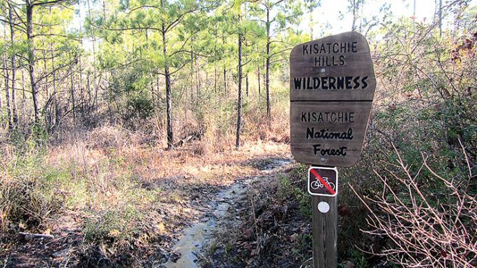 Hiking trail in the Kisatchie National Forest, Louisiana