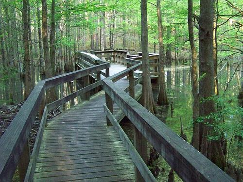 Walkway in national park