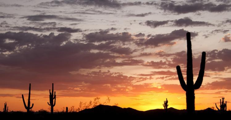 HSI targets bandit crews that exploit the Arizona border
