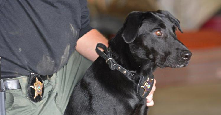 The Urgency In Fighting Childhood >> Electronic Detection K9 Ruger A Game Changer In Fight Against