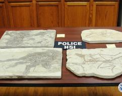 Wyoming fossil retailer pleads guilty to smuggling dinosaur and other fossils into the US