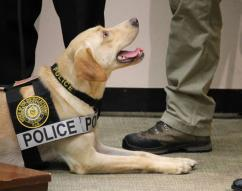 Charlie, a 2-year-old Labrador retriever, is the first and only electronic-detection forensic K9 in Pennsylvania