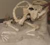 ICE returns dinosaur skeletons, eggs to Mongolia